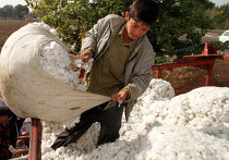 Узбекистан уборка хлопка дети