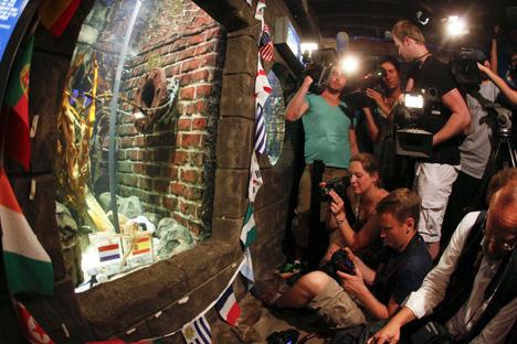 Последние предсказания осьминога Пауля на ЧМ-2010