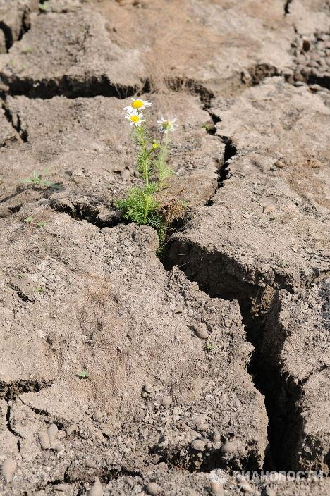Засуха в Челябинской области