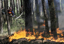 Тушение лесного пожара в районе села Масловка