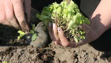 Весенние полевые работы в фермерском хозяйстве