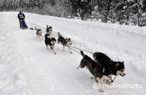 """Международная гонка на собачьих упряжках """"По земле Сампо"""""""