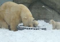 Белые медвежата в московском зоопарке вышли на прогулку