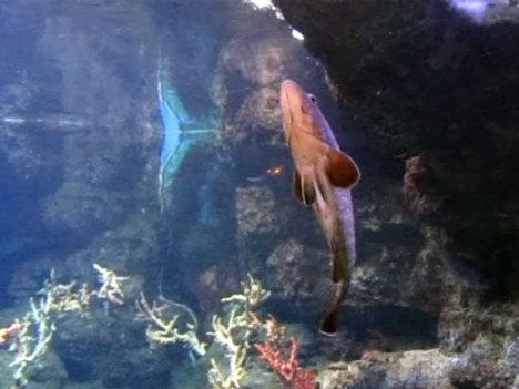 Тайны подводного мира и его обитатели за стеклом аквариума Барселоны