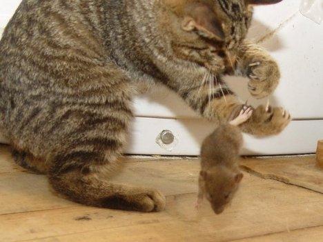 Деревенские коты и мыши