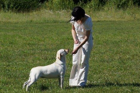 От такс до колли: выставка собак в Иванове