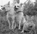 Собаки Собаки Отважная, Малек и кролик Звездочка