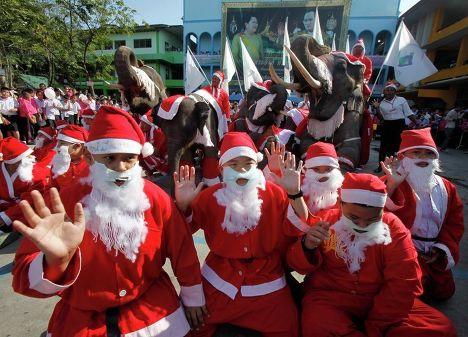 В тайской провинции Аюттхая даже слонов наряжают в Санта-Клаусов.