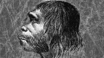 Один из первых обликов неандертальца
