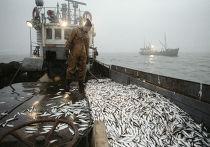 Улов рыбы на траулере рыболовецкого колхоза