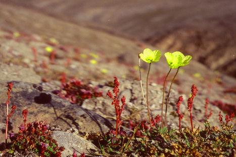 Природа острова Элсмир