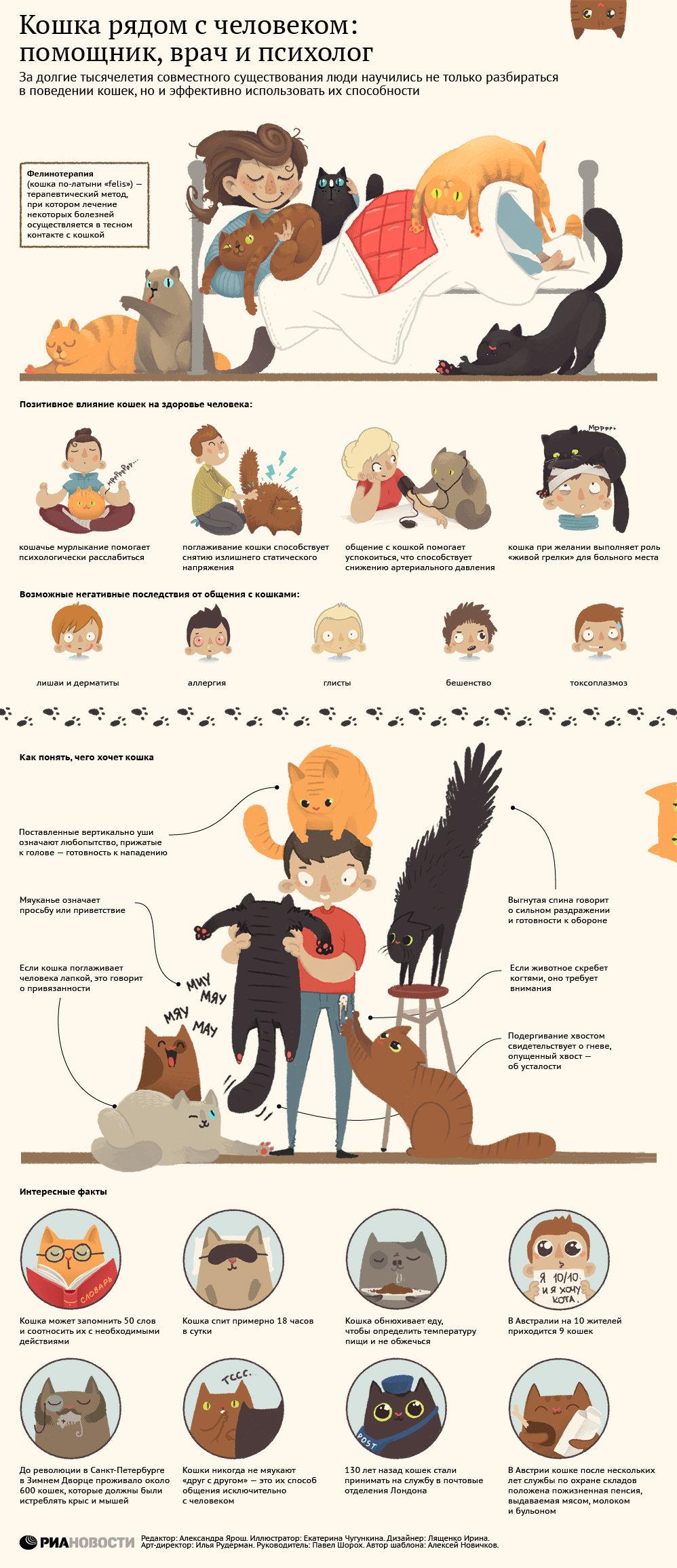 Фелинотерапия и другие прелести общения с кошками