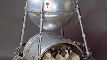 """Второй искусственный спутник Земли с """"космонавтом"""" Лайкой на борту"""