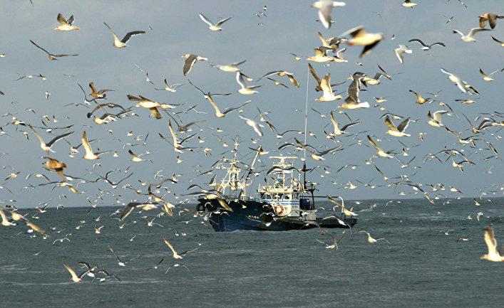 Рыболовецкий сейнер в заливе Оля в окрестностях острова Итуруп