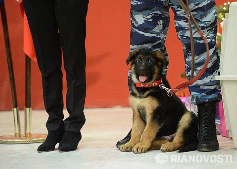 Торжественная передача в дар французской полиции щенка Добрыни