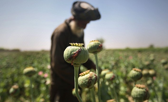 Опийный мак в Афганистане