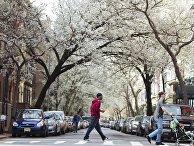 Весна в Нью-Йорке