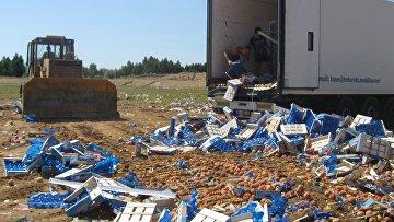 Уничтожение санкционной продукции в России