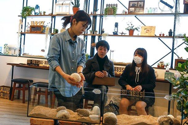 Японское кафе с ежиками