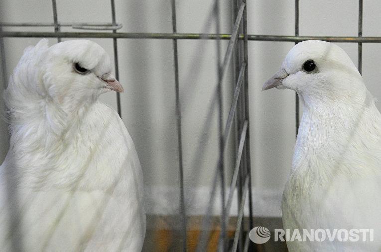 Выставка «Зоомир» в Красноярске