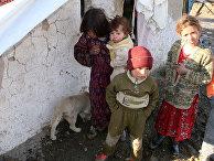 Дети и собаки в палаточном лагере
