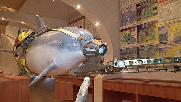 Новое боевое снаряжение дельфина