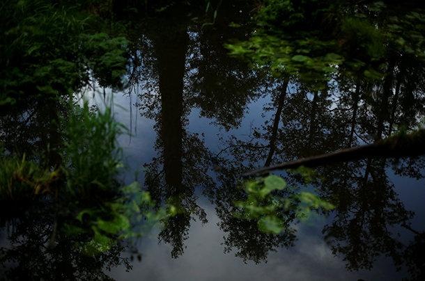 Беловежская пуща, последний девственный лес в Европе, Польша