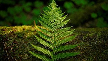Беловежская пуща: последний реликтовый лес Европы