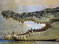 Зоопарк «Крокодилвиль» в Екатеринбурге