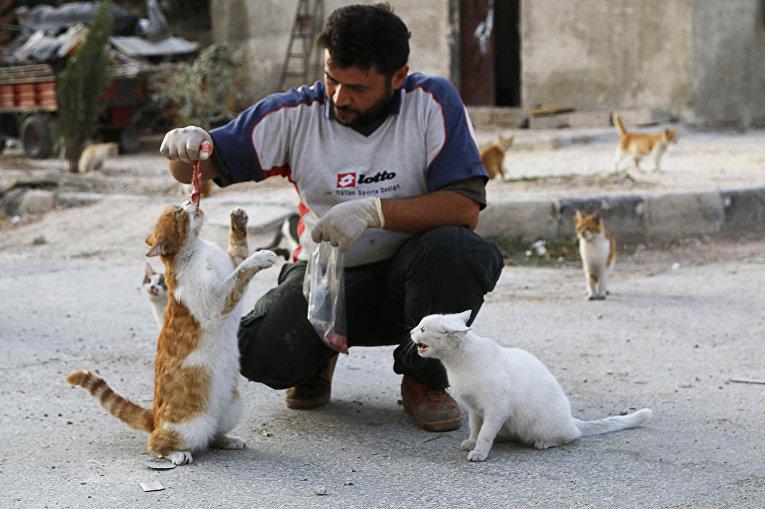 Водитель скорой помощи Ала кормит бездомных кошек в Алеппо