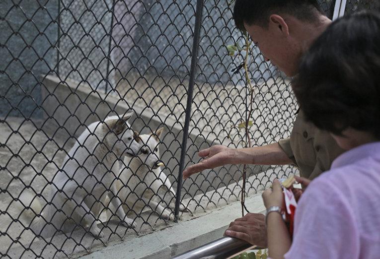 Один день в северокорейском зоопарке