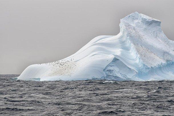 Пингвины на леднике в Антарктиде