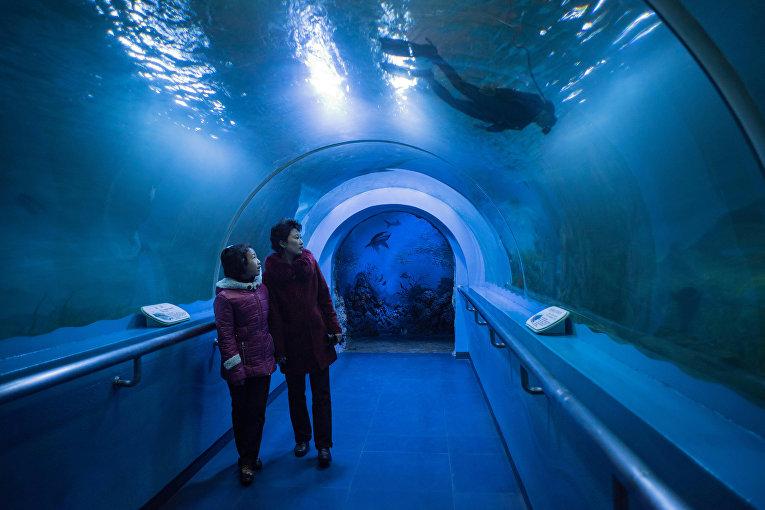 Посетители аквариума в Пхеньяне
