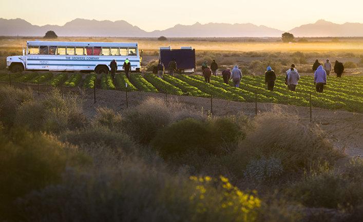 Сезонные рабочие на поле в Велдоне (Аризона) неподалеку от границы