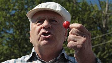 Владимир Жириновский совместно с активистами партии ЛДПР принял участие в сборе сезонной ягоды в Совхозе имени Ленина