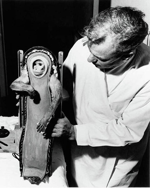 Макак-резус Сэм, побывавший в космосе на корабле Little Joe 2