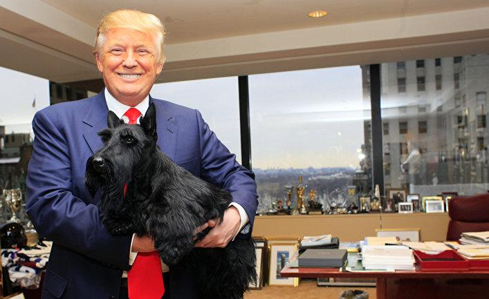 Победитель Вестминстерской выставки собак позирует с Дональдом Трампом в Трампа-Тауэр в Нью-Йорке