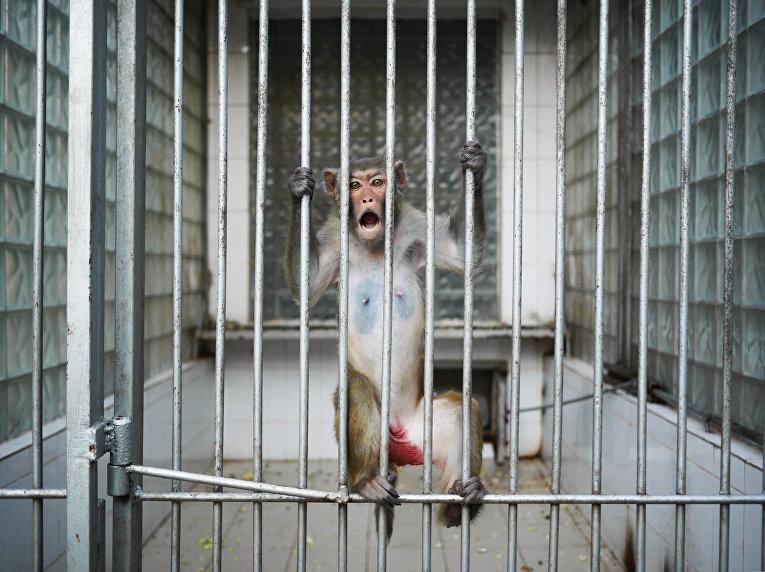 Институт изучения приматов в Абхазии