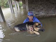 Наводнение, которое принес с собой тропический шторм «Харви», угрожает не только людям, но и множеству животных