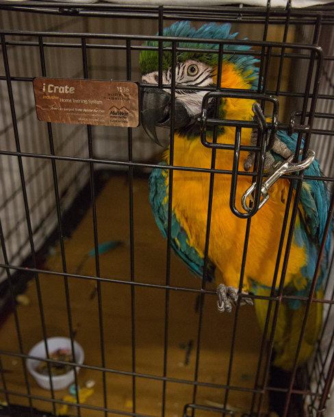 Попугай нашел убежище в центре Delco в Остине