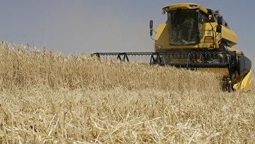 Уборка урожая зерновых в Ростовской области