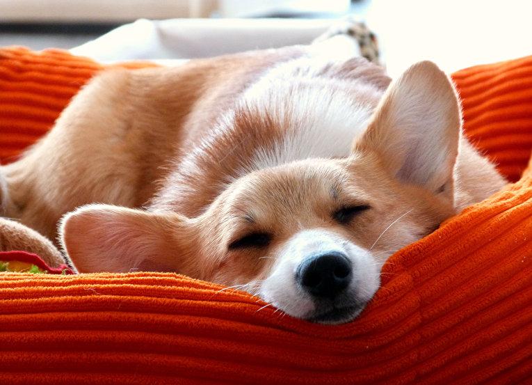 Картинки щенки милые и красивые спящие лишним