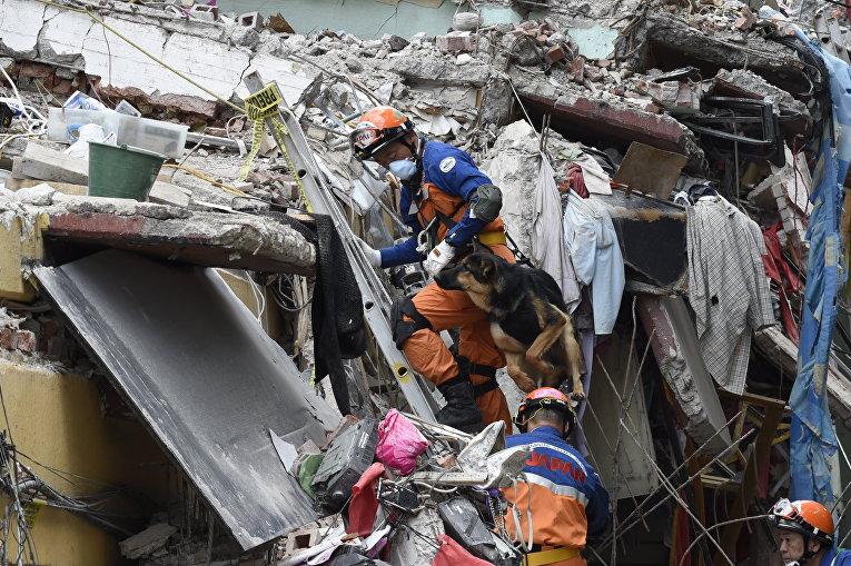 Японские спасатели работают вместе с поисковой собакой