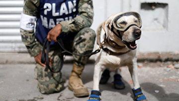 Представитель мексиканского флота стоит рядом с собакой-спасателем после землетрясения