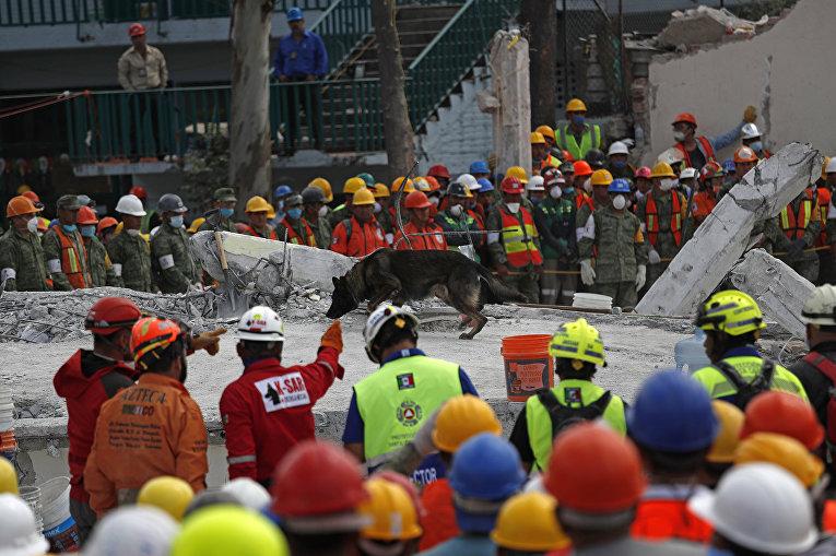 Спасатели и волонтеры соблюдают тишину, пока собака обыскивает руины четырехэтажного завода