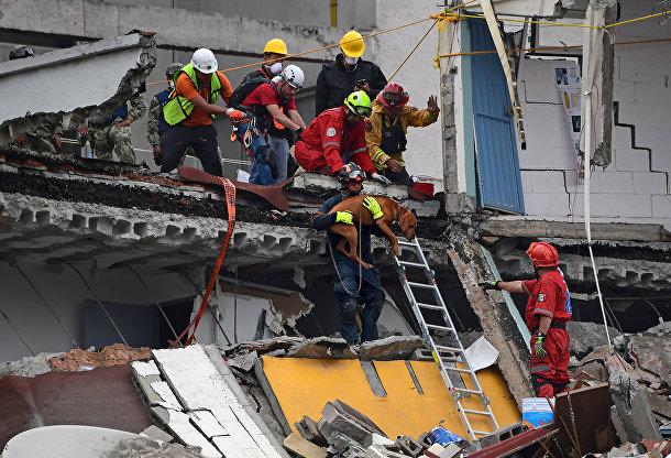 Спасатели спускают поисковую собаку, чтобы та помогла им искать выживших в Мехико