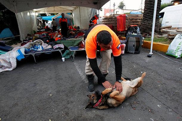 Член чилийской команды спасателей Los Topos играет с аргентинской поисковой собакой