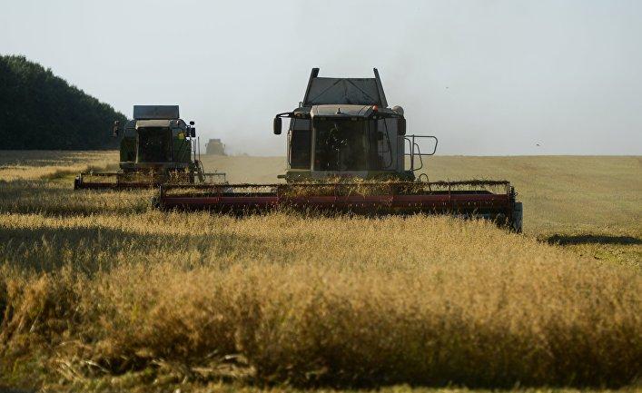 Уборка зерновых в Новосибирской области