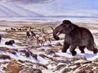 """Человек и климат внесли равный """"вклад"""" в вымирание мегафауны ледникового периода"""