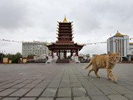"""Пагода """"Семи дней"""" в Элисте"""